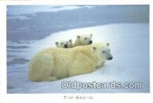 ber001240 - The Arctic Bear Bears Postcard Post Card Old Vintage Antique
