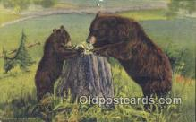 ber001241 - Bear Bears Postcard Post Card Old Vintage Antique