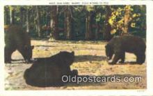 ber001245 - Bear Bears Postcard Post Card Old Vintage Antique