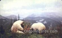 ber001252 - Kermode, Gribble Island, British Columbia Bear Bears Postcard Post Card Old Vintage Antique