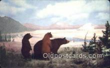 ber001254 - North America Bear Bears Postcard Post Card Old Vintage Antique