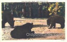 ber001255 - Bear Bears Postcard Post Card Old Vintage Antique