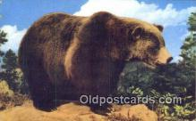 ber001262 - Grizzly Bear Bears Postcard Post Card Old Vintage Antique