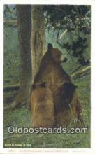 ber001267 - Yellowstone Park, Wyoming Bear Bears Postcard Post Card Old Vintage Antique
