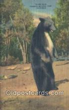 ber001268 - Yosemite National Park Bear Bears Postcard Post Card Old Vintage Antique