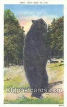 ber001276 - Bear Bears Postcard Post Card Old Vintage Antique