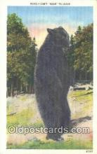 ber001281 - Bear Bears Postcard Post Card Old Vintage Antique