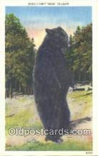 ber001282 - Bear Bears Postcard Post Card Old Vintage Antique