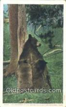 ber001286 - Yellowstone Park, Wyoming Bear Bears Postcard Post Card Old Vintage Antique