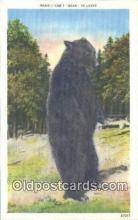 ber001288 - Bear Bears Postcard Post Card Old Vintage Antique