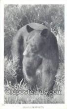 ber001289 - Duluth Minnesota, USA Bear Bears Postcard Post Card Old Vintage Antique