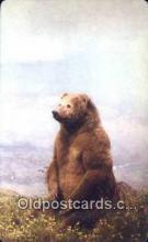 ber001293 - Peninsula Brown, Unimak, Island Alaska Bear Bears Postcard Post Card Old Vintage Antique