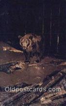 ber001301 - Bear Bears Postcard Post Card Old Vintage Antique