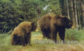 ber001306 - Bear Bears Postcard Post Card Old Vintage Antique
