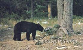 ber001307 - Bear Bears Postcard Post Card Old Vintage Antique