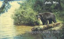 ber001314 - Cable, Wisconsin, USA Bear Bears Postcard Post Card Old Vintage Antique