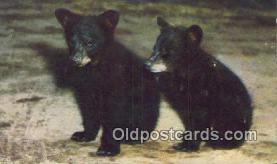 ber001316 - Bear Bears Postcard Post Card Old Vintage Antique