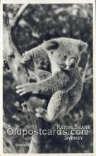 ber001340 - Kiala Park Sydney Bear Postcard, Bear Post Card Old Vintage Antique