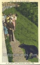 ber001343 - Great Smoky Mts. National Park Bear Postcard, Bear Post Card Old Vintage Antique
