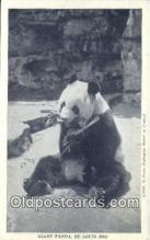 ber001354 - St. Louis Zoo Bear Postcard, Bear Post Card Old Vintage Antique