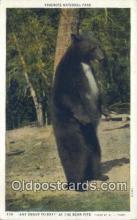 ber001357 - Yosemite National Park Bear Postcard, Bear Post Card Old Vintage Antique
