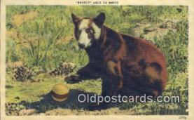 ber001364 - Bear Postcard, Bear Post Card Old Vintage Antique