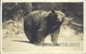 ber001366 - Bear Postcard, Bear Post Card Old Vintage Antique