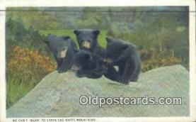 ber001367 - Bear Postcard, Bear Post Card Old Vintage Antique