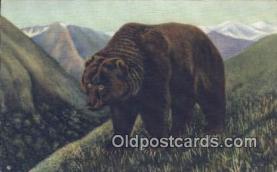 ber001368 - Alaskan Bear Postcard, Bear Post Card Old Vintage Antique