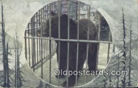 ber001374 - Wahington Park Zoo Bear Postcard, Bear Post Card Old Vintage Antique