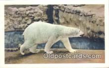 ber001377 - San Diego Zoo, Kodiak Bear Postcard, Bear Post Card Old Vintage Antique