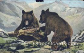 ber001379 - Bear Postcard, Bear Post Card Old Vintage Antique