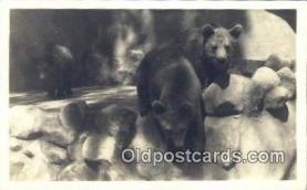 ber001380 - Bear Postcard, Bear Post Card Old Vintage Antique