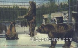 ber001381 - Stanley Park, Vancouver B.C. Canada Bear Postcard, Bear Post Card Old Vintage Antique