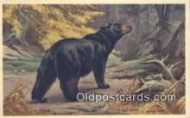 ber001384 - Artist Walter Weber Bear Postcard, Bear Post Card Old Vintage Antique