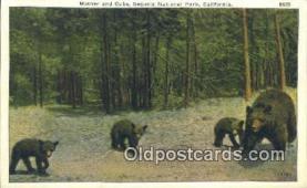 ber001390 - Sequoia National Park, California, USA Bear Postcard, Bear Post Card Old Vintage Antique