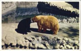 ber001391 - San Diego Zoo, California, Kodiak Bear Postcard, Bear Post Card Old Vintage Antique