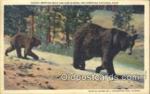 ber001392 - Yellowstone National Park Bear Postcard, Bear Post Card Old Vintage Antique