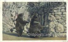 ber001396 - Lincoln Park Zoo, Chicago, Ill, USA Bear Postcard, Bear Post Card Old Vintage Antique