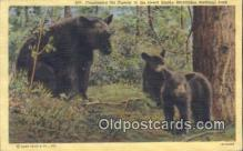 ber001399 - Great Smokey Mountains National Park Bear Postcard, Bear Post Card Old Vintage Antique