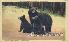 ber001402 - Yellowstone National Park Bear Postcard, Bear Post Card Old Vintage Antique