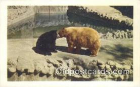 ber001406 - San Diego Zoo, California, Kodiak Bear Postcard, Bear Post Card Old Vintage Antique