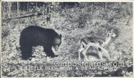 ber001408 - Bear Postcard, Bear Post Card Old Vintage Antique
