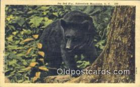 ber001409 - Adirondack Mountains, NY USA Bear Postcard, Bear Post Card Old Vintage Antique