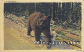 ber001410 - Bear Postcard, Bear Post Card Old Vintage Antique