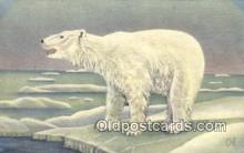 ber001411 - Northwest and Alaska Bear Postcard, Bear Post Card Old Vintage Antique
