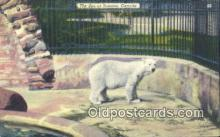 ber001412 - Zoo at Toronto Canada Bear Postcard, Bear Post Card Old Vintage Antique