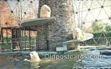 ber001413 - Parc Zoologique, Gramby Canada Bear Postcard, Bear Post Card Old Vintage Antique
