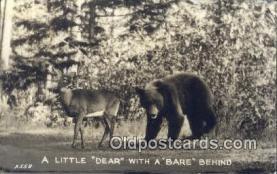 ber001421 - A little Dear  Bear Postcard, Bear Post Card Old Vintage Antique