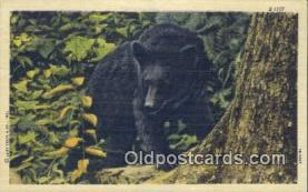 ber001424 - Bear Postcard, Bear Post Card Old Vintage Antique